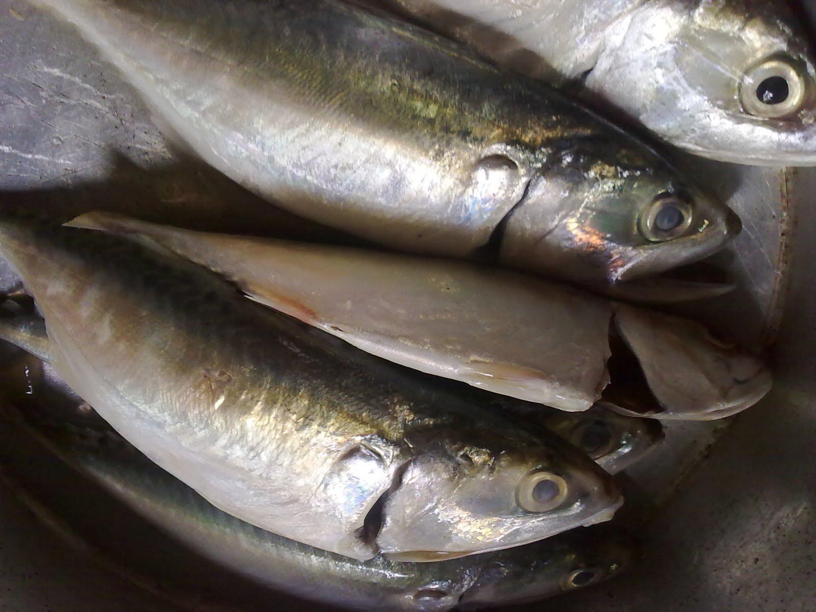 emak. bukan chef.: gulai ikan temenung oghang kedah!