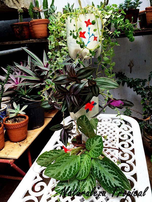 Naturaleza tropical como hacer una mini fuente con for Como adornar un jardin con plantas