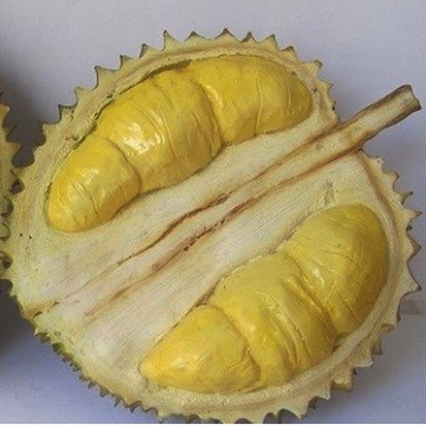 Durian Mimang, Khasiat Durian Mimang, Manfaat Durian Mimang, Download Poster Durian Mimang
