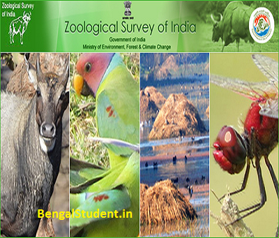 Junior Project Fellow Jobs in Zoological Survey  all over India