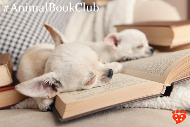 Two chihuahuas sleeping on some books on the settee. The book of the month is The Other End of the Leash.