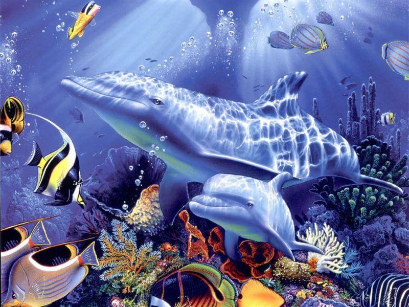 Home Wallpaper Life: Animales Acuaticos: Animales Acuaticos