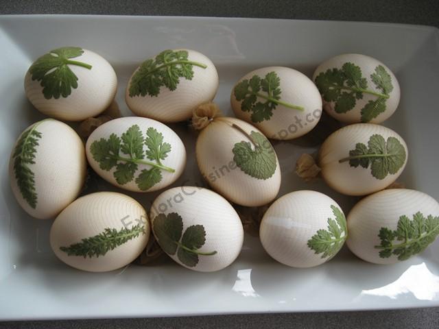 pe ouă de ouă varicoase)