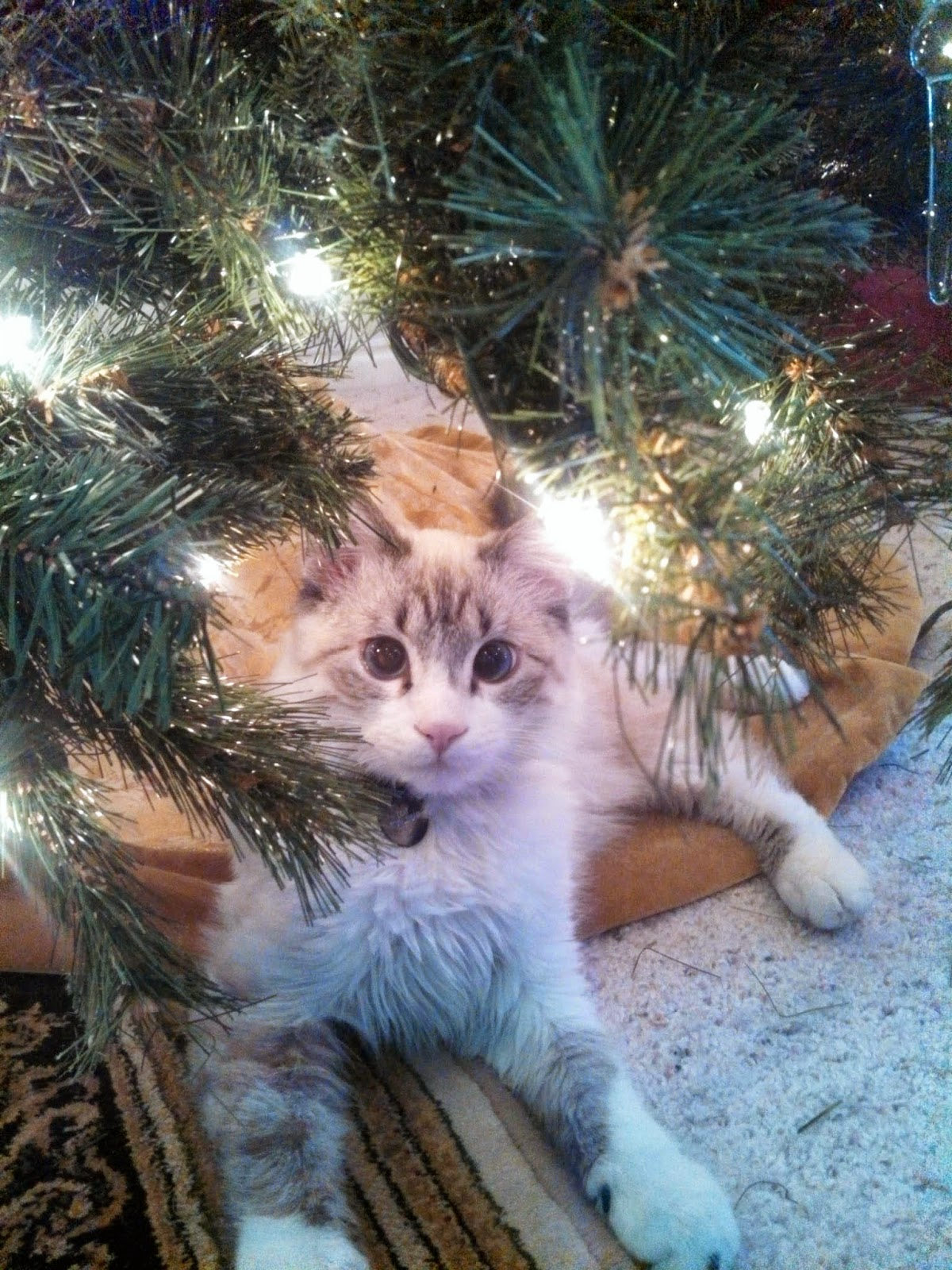 Olaf Christmas Trees.Completely Indie The Christmas Tree The Olaf Cat S Nemeses