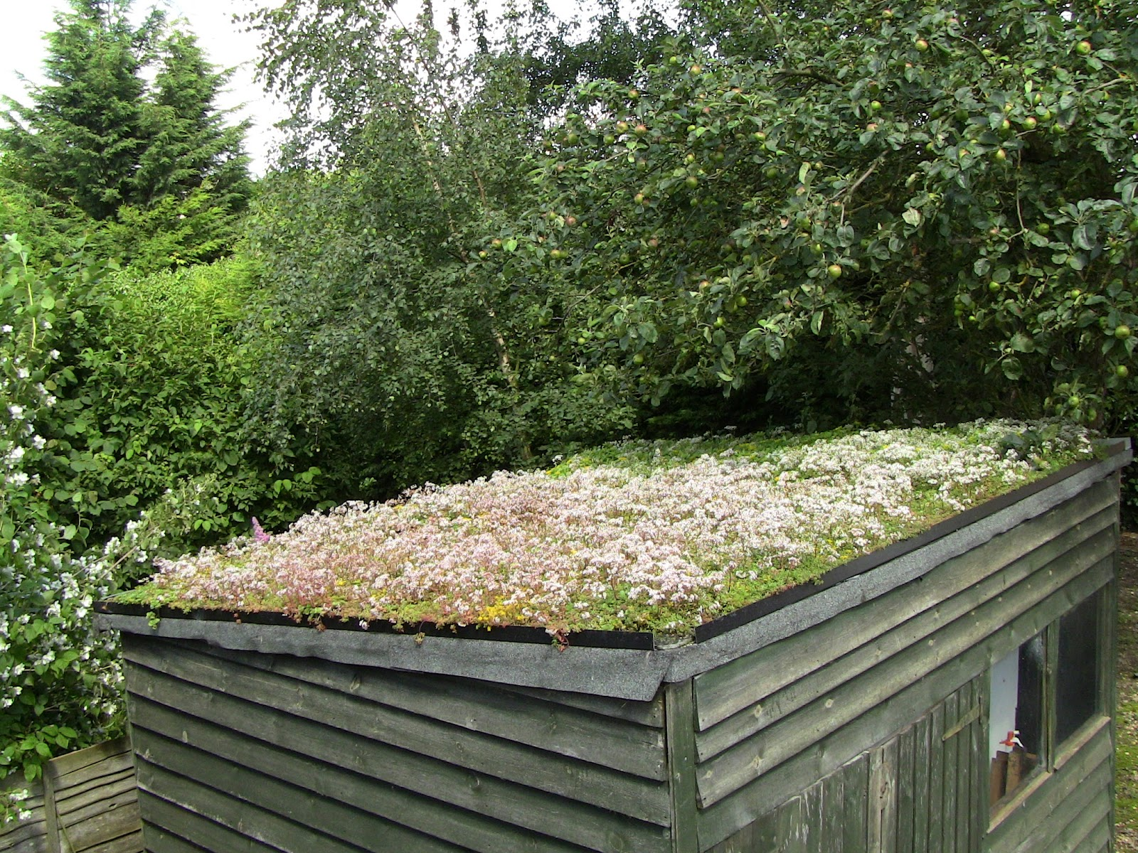 Green Roofs For Ordinary Folk