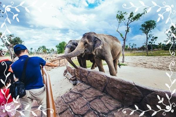 vuong-thu-safari