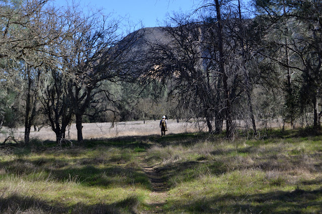 oak savanna area with a trail