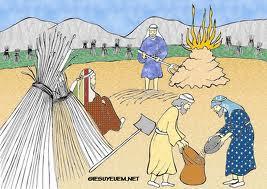 VUI HỌC THÁNH KINH CHÚA NHẬT 16 TN A