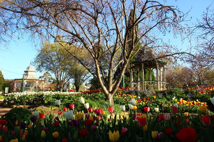 Traveloscopy Travelblog: Bowral's Tulip Time proves blooming
