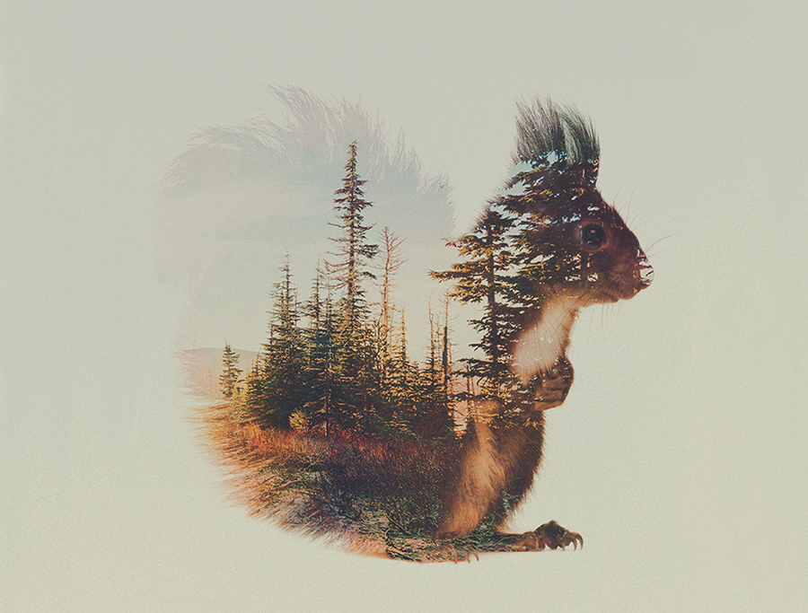 11-Squirrel-Andreas-Lie-Animals-in-Photographic-Double-Exposures-www-designstack-co