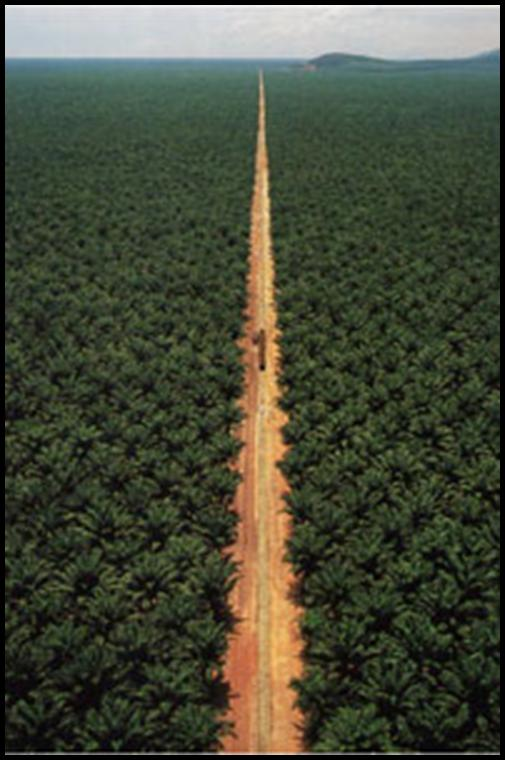 Oil Palm Plantations – Agroforestry is Another Story ...