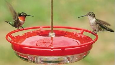 wild birds unlimited no hummingbirds at feeder. Black Bedroom Furniture Sets. Home Design Ideas