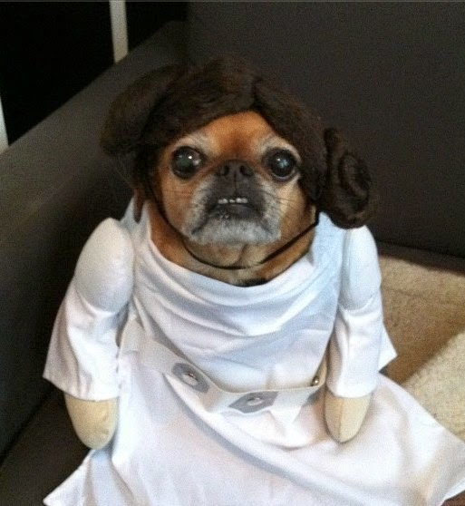 star wars pet costume-7
