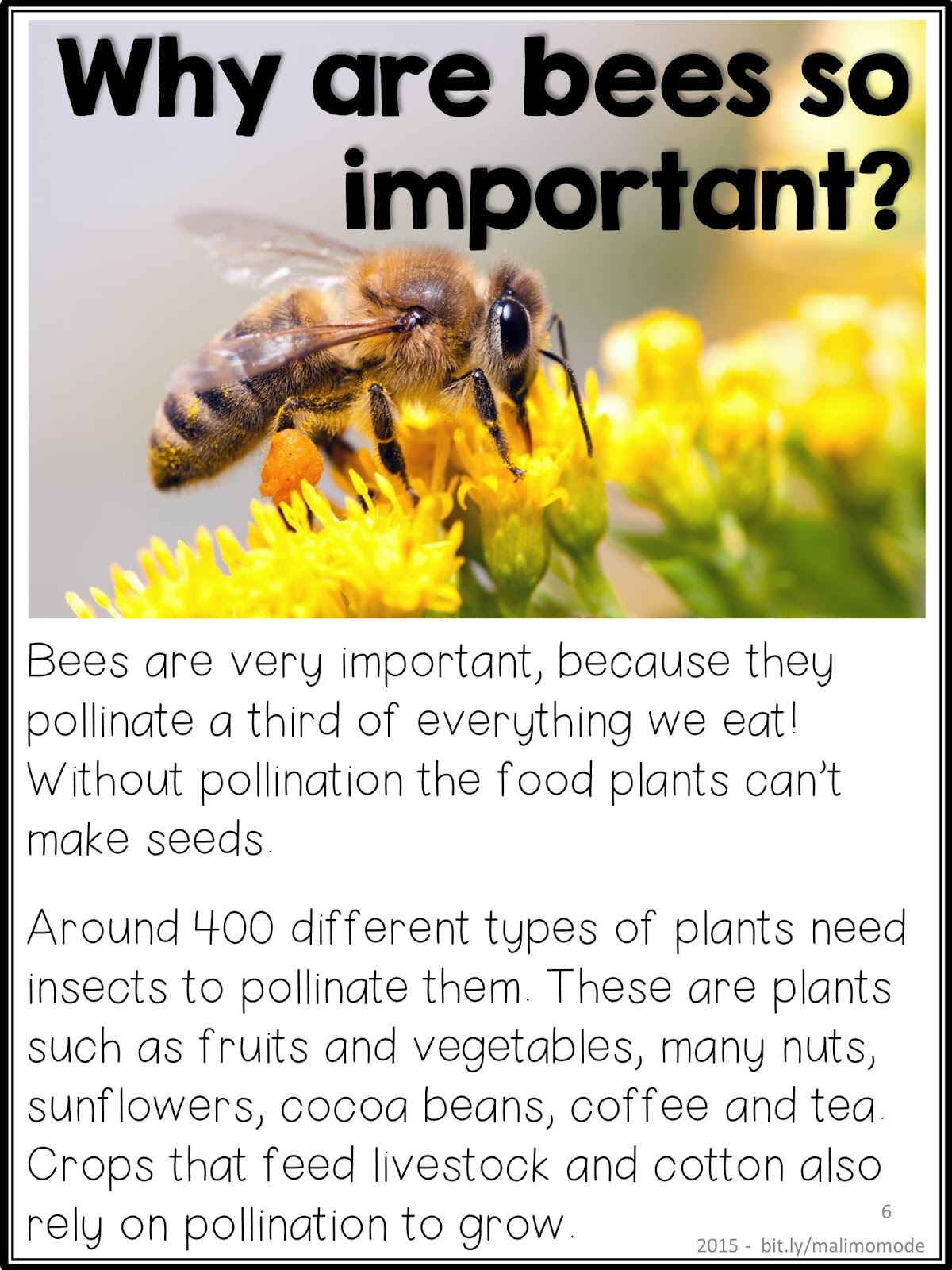 Worksheet Questions About Bees bees and pollination the 15 most important questions to ask importan especially no