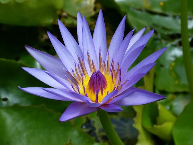 Berbagai Jenis Bunga di Dunia