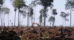 4 Penyebab Punahnya Harimau Jawa