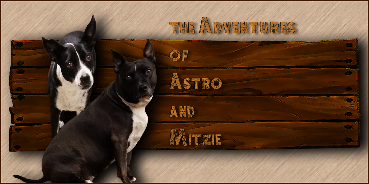 The Adventures Of Astro and Mitzie