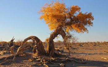Wallpaper: Sand dunes in the desert