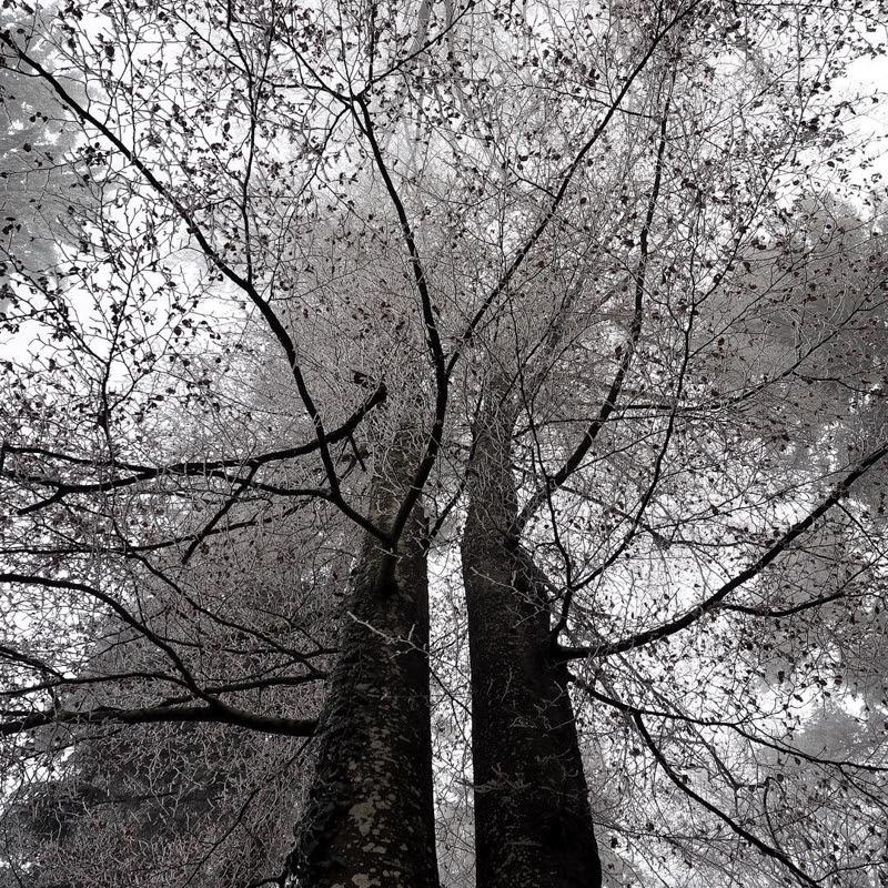 Beautiful Nature Photography by Olivier Richina from Switzerland.