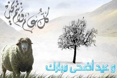 Keutamaan Dan Hikmah Ibadah Qurban