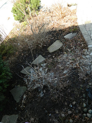 Toronto Leslieville Spring Front Yard Cleanup Before by Paul Jung Gardening Services--a Toronto Organic Gardening Company