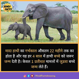 interesting facts about elephant in hindi