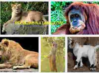 Contoh Hewan mamalia