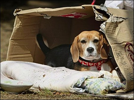Abandoning any animal for any reason can land you in prison for up to three months. Section 11(1)(i) and Section 11(1)(j), PCA Act, 1960 lawescort
