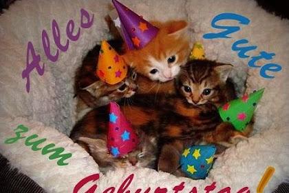 Das beste von Lustige Katzenbilder Zum Geburtstag