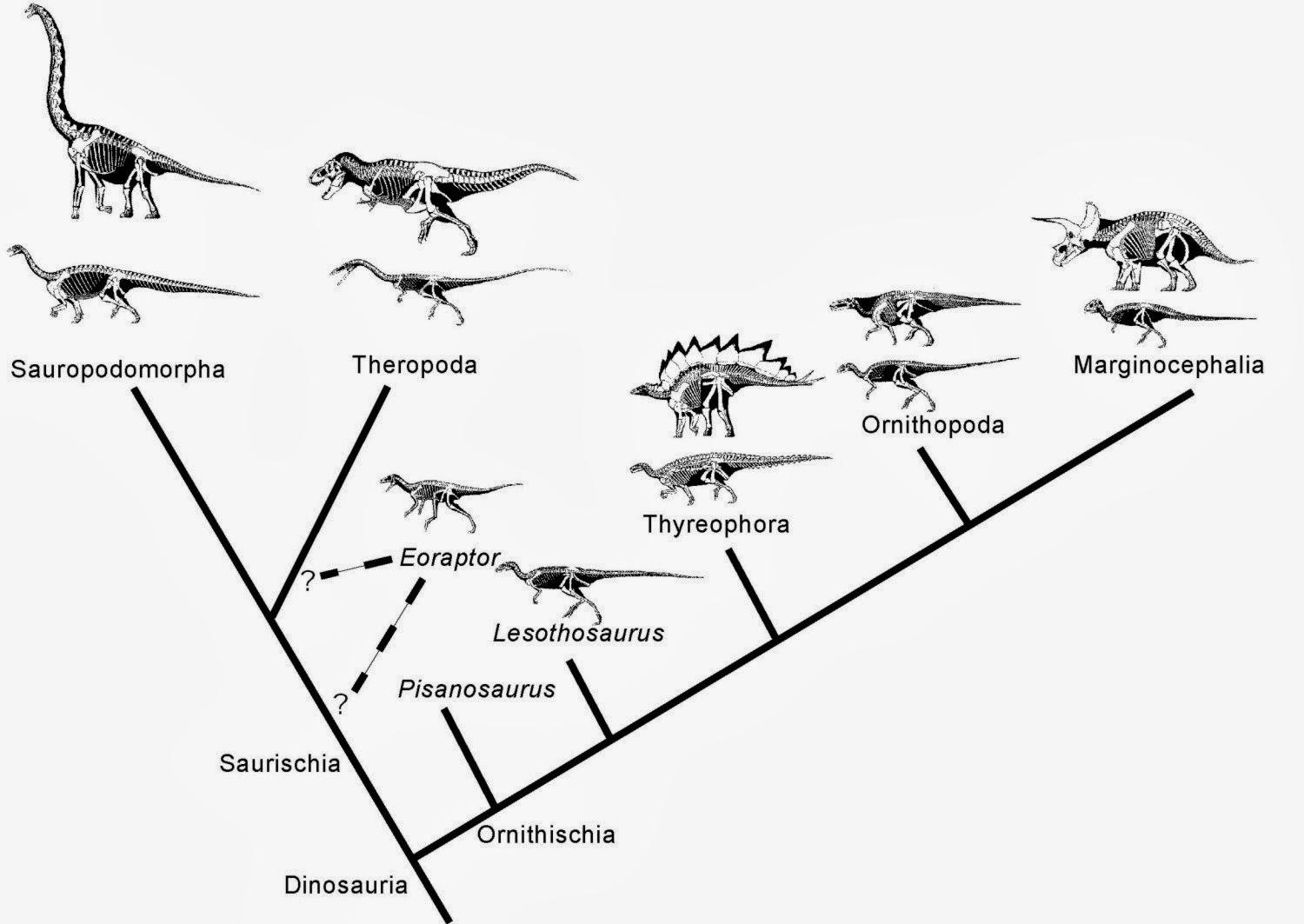 Biology Of The Reptilia Cmnh Dinosauria Amp Other Extinct