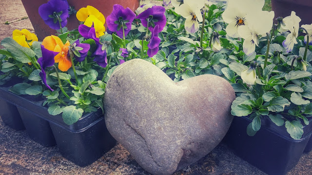 Project 366 2016 day 88 - Violas and heart  // 76sunflowers