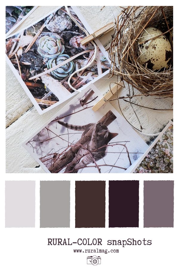 Barn board flat lay with birds nest and prints of succulents and muted plum toned colour palette from www.rural.mag.com