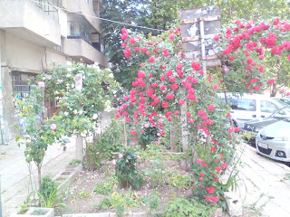 Roses, Galore, Yambol, Apartment Block,