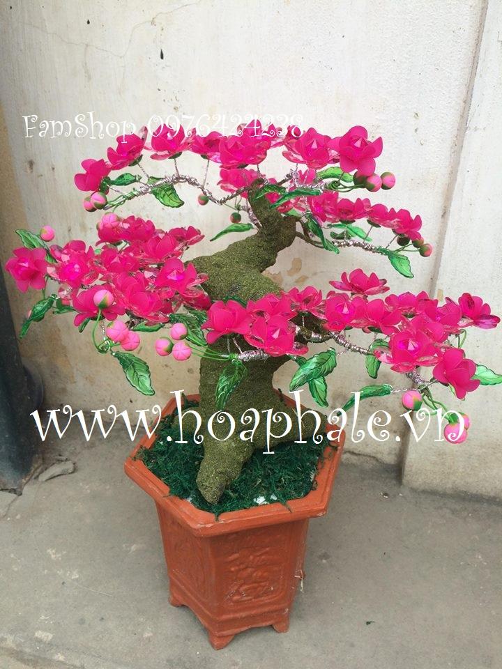 Goc bonsai cay hoa dao tai Tam Trinh