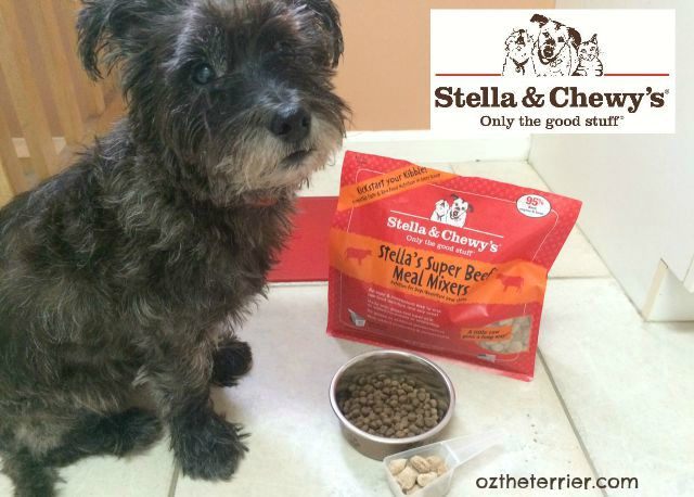Oz the Terrier show you how to add Stella and Chewy's raw pet food Meal Mixers to your dog's kibble