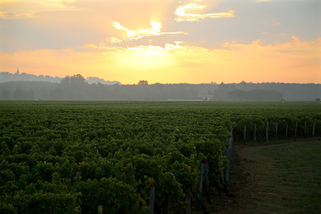dawn mist at Sauternes sweet Bordeaux