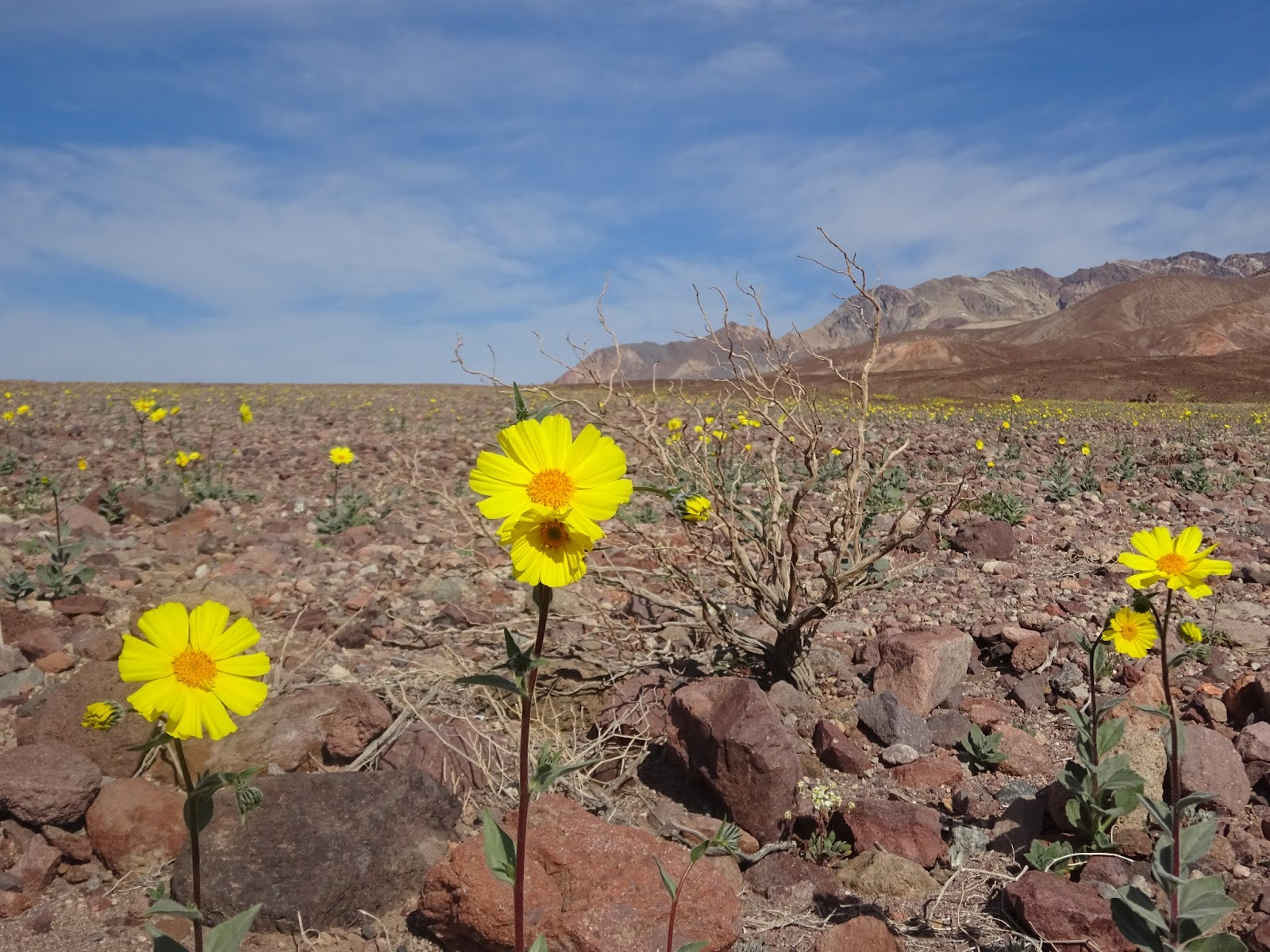 Diary Of An Autodidact Death Valley The Desert Blooms