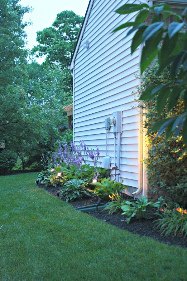 hosta garden on side of house