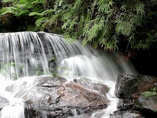 une belle cascade au cœur du parc