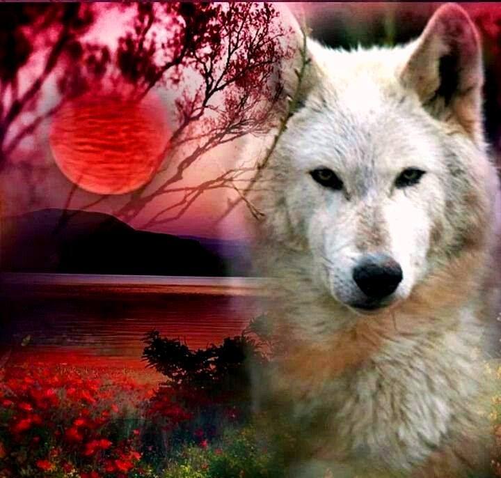 Resultado de imagem para Síndrome do lobo solitário