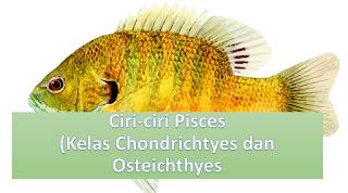 Ciri-ciri Pisces (Kelas Chondrichtyes dan Osteichthyes)
