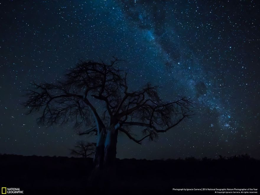20+ Of The Best Entries From The 2016 National Geographic Nature Photographer Of The Year - Under The Milky Way
