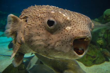 albuquerque aquarium, albuquerque biopark, albuquerque things to do