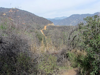 View north from the jungle area on Van Tassel Ridge
