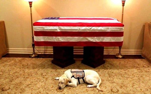 A foto do labrador Sully de George H. W. Bush que comoveu o mundo (Imagem: Reprodução/Instagram)