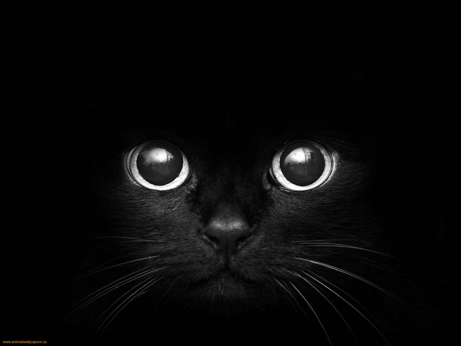 red cat eyes wallpaper-#14