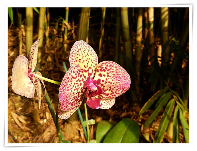 Orchids in the Rain Forest Biome, EDen Project, Cornwall