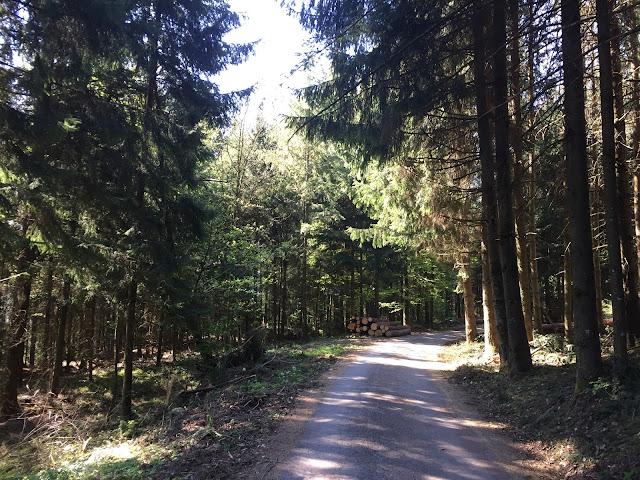 Im schattigen Wald