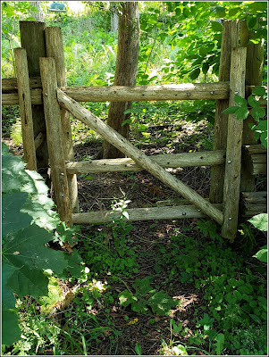 August 14, 2018 - Finding the possibility of adventure in a gate we walk past everyday.