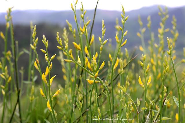 Wiosna w Toskanii - natura